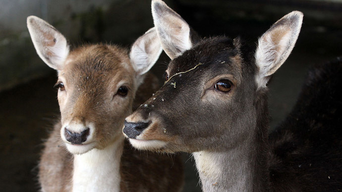 Oh, deer! Outrage as Zurich zoo puts animals… on menu