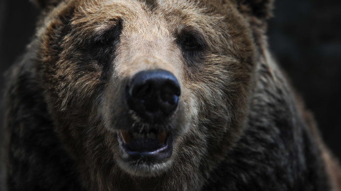 ​Hardware VS Predator: Man repelled Siberian bear attack with computer