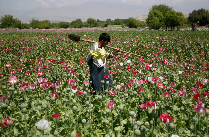 An Afghan man works on a poppy field in Jalalabad province (Reuters / Parwiz)