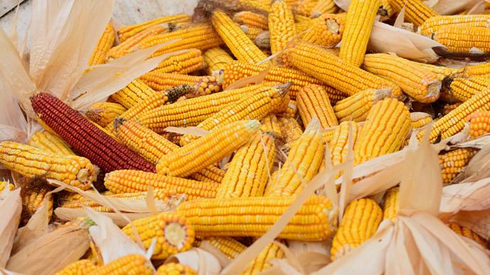 Chief McDonald's fries supplier gets USDA nod for 'cancer-reducing' GMO-potato
