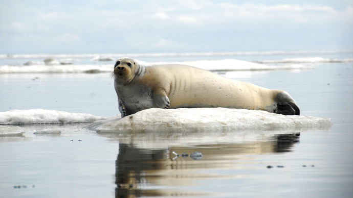 'Nail in coffin for Norwegian seal hunting': Govt cuts subsidies