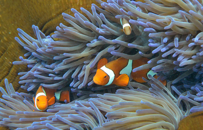 Fish swimming through the coral on Australia's Great Barrier Reef. (AFP Photo / William West)