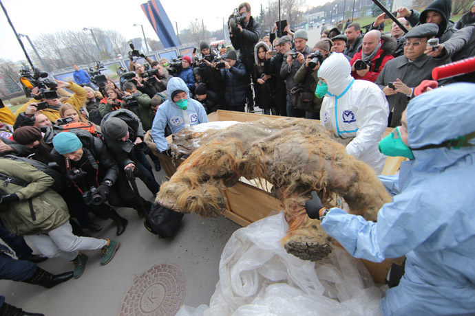 "Landing the Yakutian baby mammoth ""Yuka"" outside the Central Artist House before the onset of the Russian Geographical Society Festival. (RIA Novsti/Vitaly Belousov)"