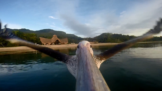Birds vs GoPro: What happens when nature meets technology (VIDEOS)