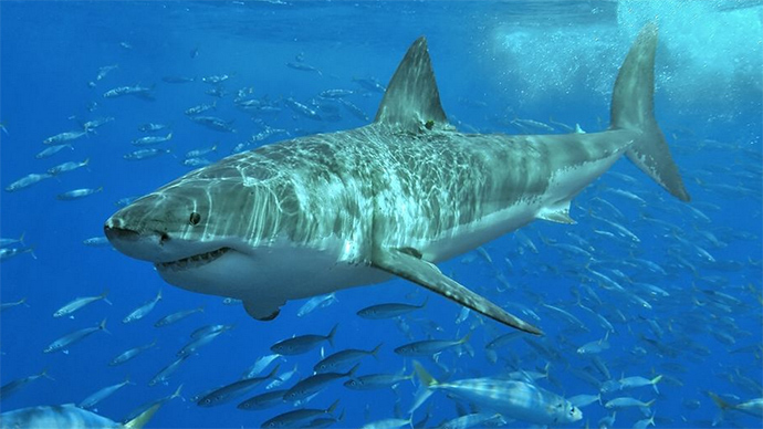 Jaw-dropping selfie: Photographer snaps pic with Great White shark