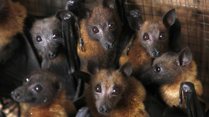 Villain or hero? Bats may be key to curing Ebola, scientists say