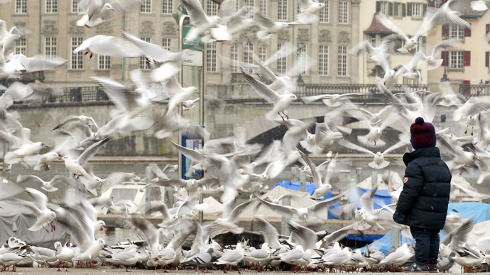 Europe has lost 20% of bird population since 1980