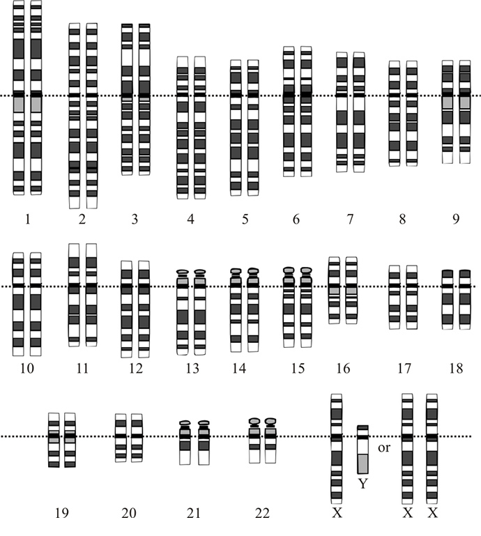 Human genome (Image from wikipedia.org)