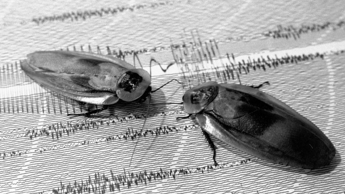 Cockroaches to the rescue: 'Cyborg' insects can help save people trapped in earthquakes