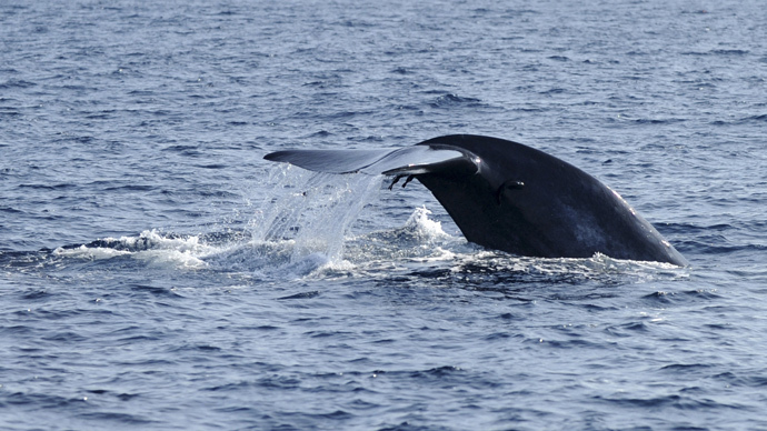 US Navy to kill, injure 'thousands' of whales, dolphins during drills – activists