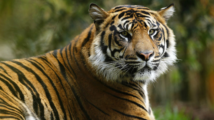 Disney & the beast: Police hunt for tiger on loose near Paris theme park