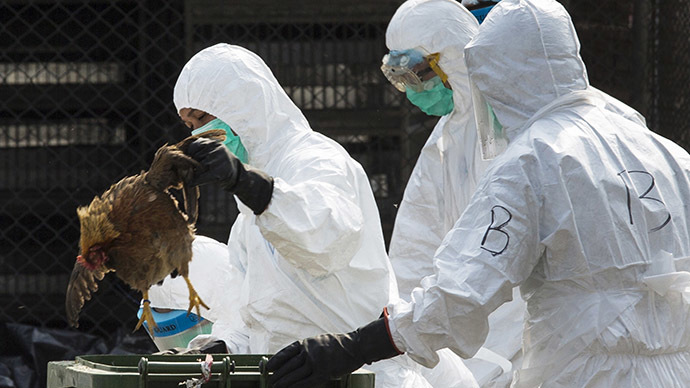 ​Dutch ban poultry transport over 'highly pathogenic' bird flu strain