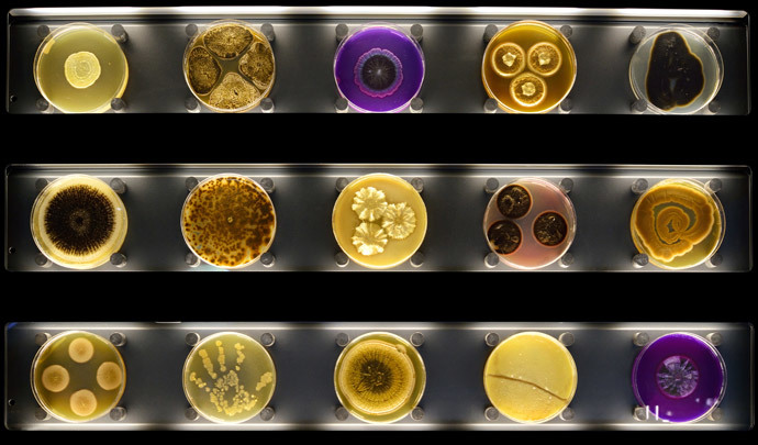 "A display of Petri dishes with microbes growing in them at Micropia, the world's first ""interactive microbe zoo"" in Amsterdam (AFP Photo / Maarten Van Der Wal)"