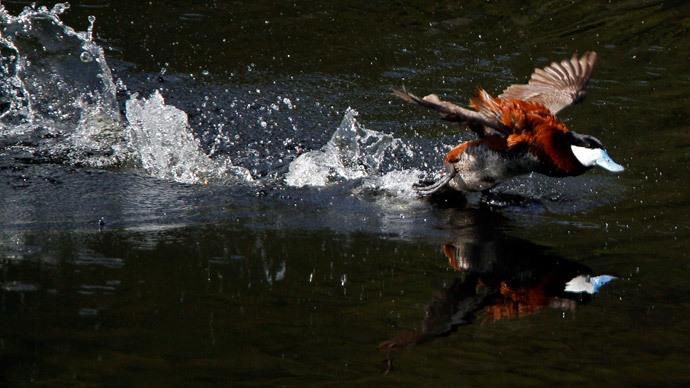 Reuters / Jim Urquhart