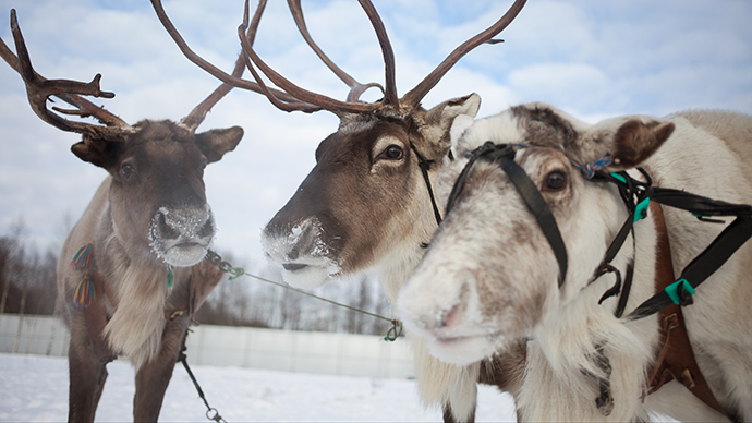 Police reindeer may soon be deployed in Russian tundra