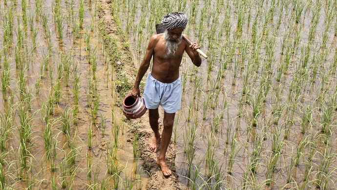 Rising suicide rate for Indian farmers blamed on GMO seeds
