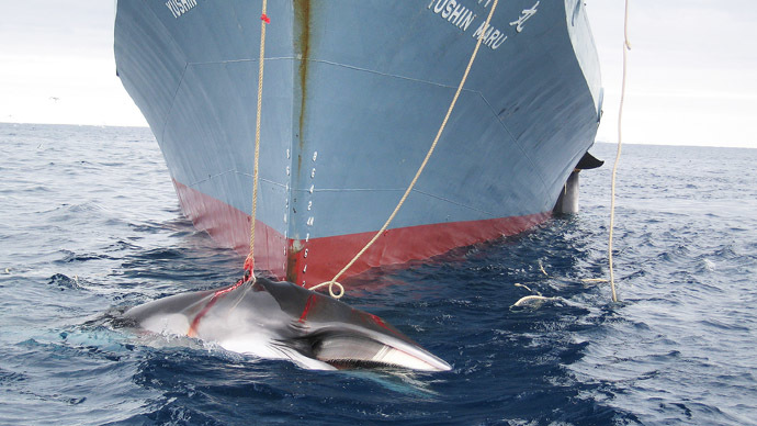 'For science's sake': Japan insists on whaling despite world condemnation