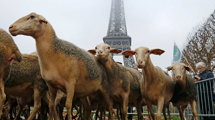 French farmers take sheep flocks to Eiffel Tower to protest 'govt-protected' wolves