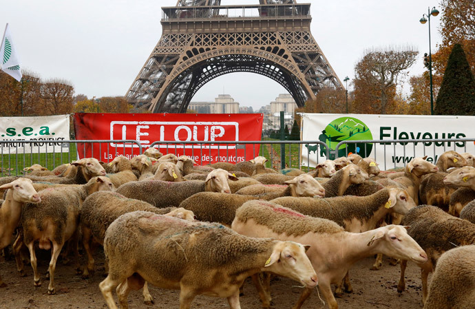 Sheep are gathered in front of the Eiffel tower in Paris during a demonstration of shepherds against the protection of wolves in France November 27, 2014. (Reuters / Jacky Naegelen)