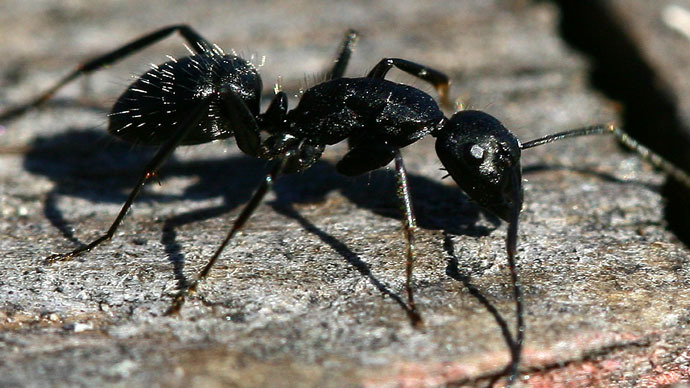 NYC litterbugs: Manhattan ants are hot dog fans, new report says