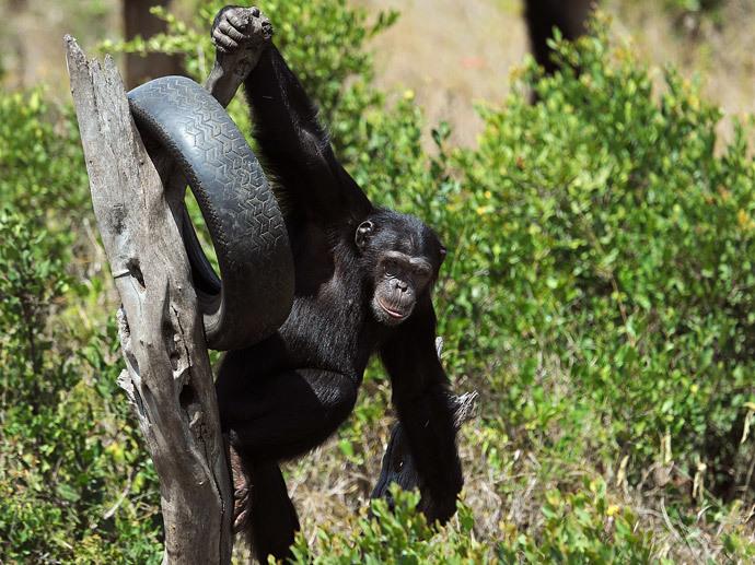 AFP Photo / Tony Karumba