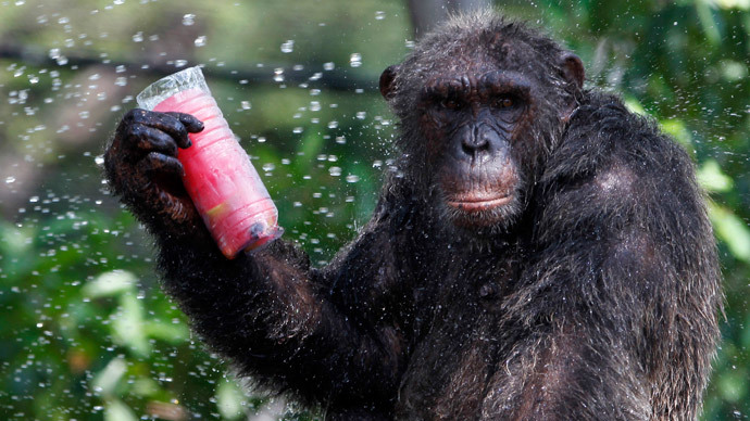 Apeus corpus? Chimps not human, says New York court
