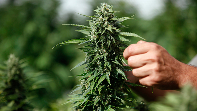 Federal govt to allow Native Americans to grow marijuana on tribal lands