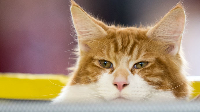 Big break: Russians search for cat who sneaked $1,000 feast at seafood shop