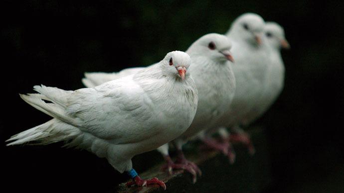 Doves (Reuters)