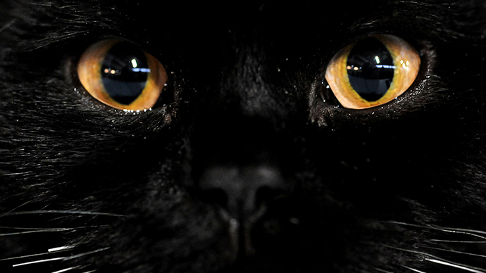 £84,000 govt probe reveals feared 'Beast of Bodmin Moor' is just a cat