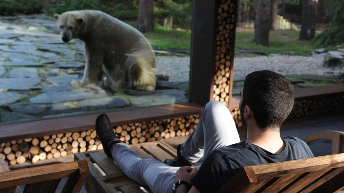 En-suite bear: French zoo offers tourists a room next to polar bear enclosure