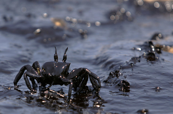 A crab covered in oil struggles towards the sea polluted with heavy fuel oil in Beirut 29 July 2006. (AFP Photo/Patrick Baz)