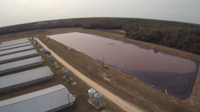 Smithfield Foods farms in N. Carolina (Still from Youtube video, SpeciesismTheMovie)