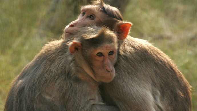 Medic monkey saves electrocuted pal at railway track in India (VIDEO)