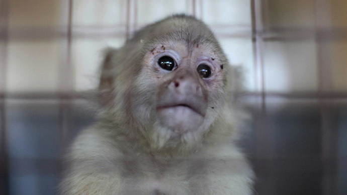 Texas lab faces fines, closure after 13 monkeys die from overheating