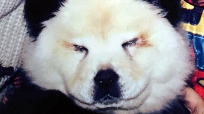 Paint them black & white: Italian circus busted for disguising dogs as pandas