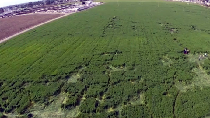 Chupakabra or drunk aliens? Mexico barley field boasts new mysterious crop patterns (VIDEO)