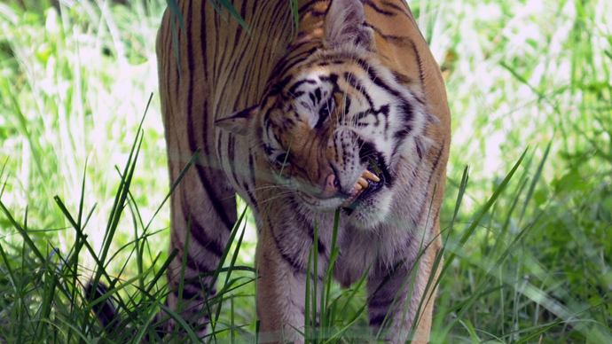 ​Tiger selfie bans and rape kit rules among new laws for 2015