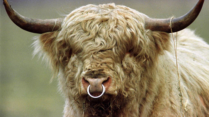 ​Nazi cows? Farmer forced to cull aggressive, genetically-engineered 'Third Reich' herd