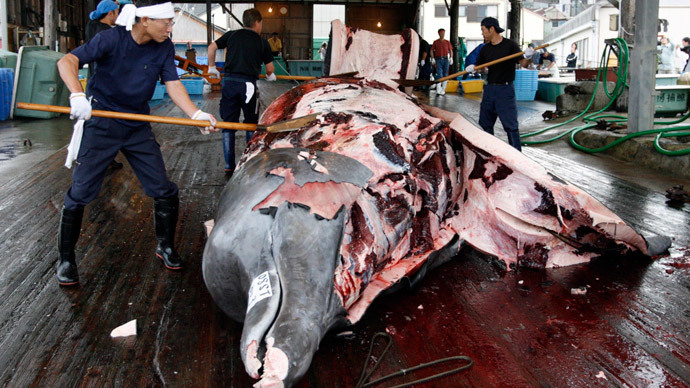 Activists slam Japan's 'non-lethal whaling program' as ships prepare for Antarctic