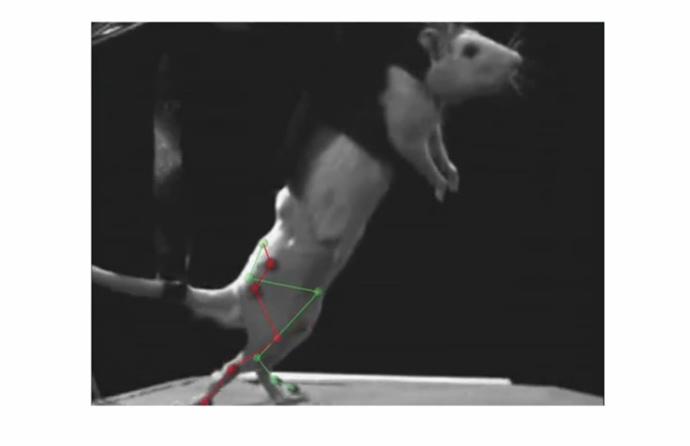Screenshot from youtube by École polytechnique fédérale de Lausanne (EPFL)