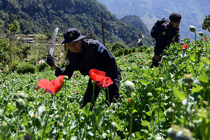 Police officers take part in an operation to destroy a poppy plantation. (AFP Photo/Johan Ordonez)