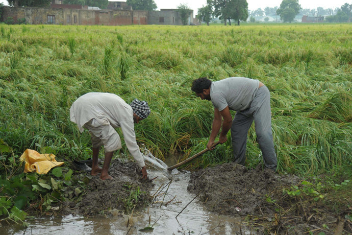 Indian farmers drain water from a flooded rice field (AFP Photo / Narinder Nanu)