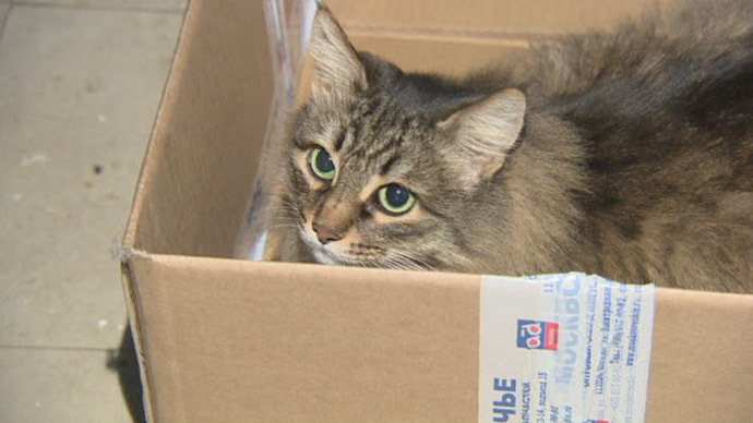 kitty in a box video