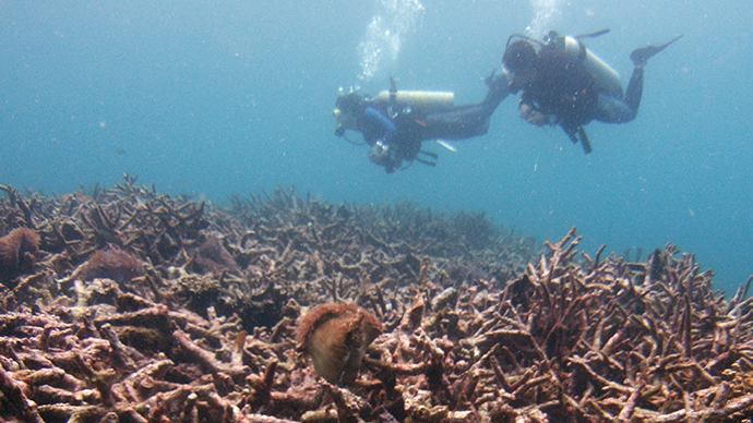Ancient underwater forest discovered by diver off Norfolk coast