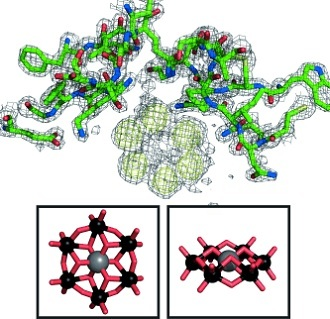 Anomalous difference map of HEWL–TEW structure. (ChemBioChem/Gregory Weiss)