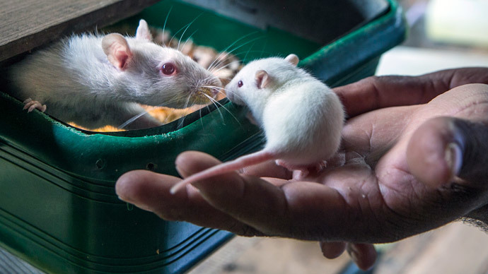 Shock therapy: Electric drug treatment can fight cocaine addiction in mice