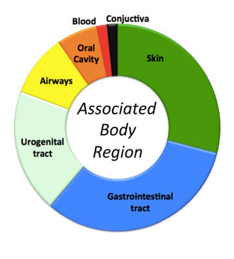 Detected bacteria were related to the most commonly associated body parts (Image from the study published in Cell Systems)