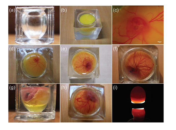 Incubation of an avian embryo with PDMS whole eggshell (Image from Science China Technological Sciences journal)