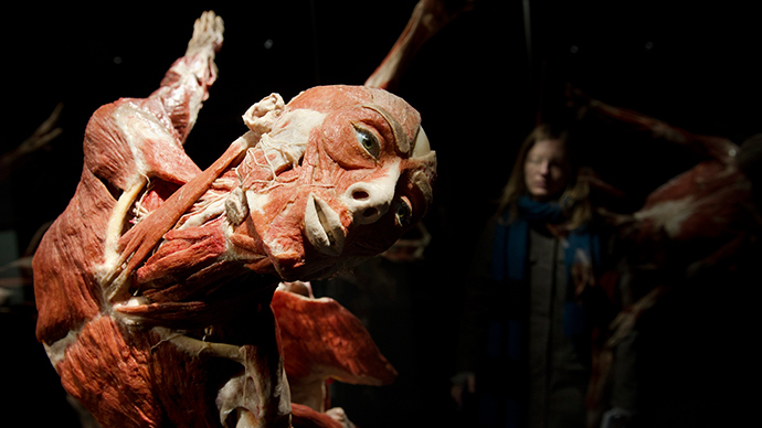 doctor death' opens controversial museum of dead bodies in berlin, Muscles